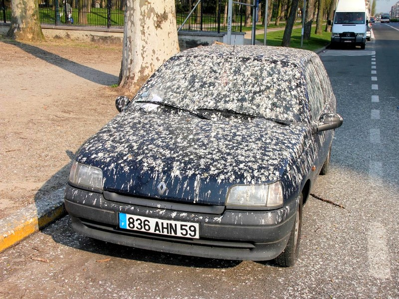 Photo of Pottyantotta már le madár az autódat?