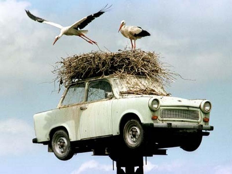 trabant gólyafészek